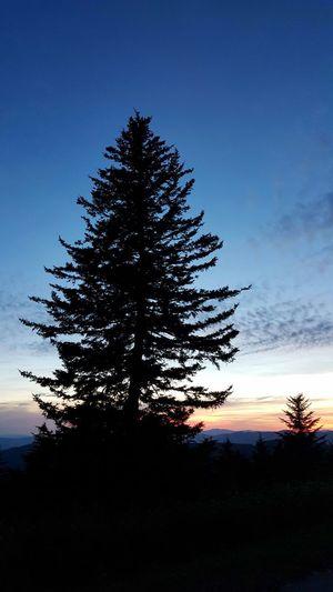 Dusk Twilight Evening Sky Evergreen Trees Evergreen Spruce Silhouette Backlit Nature Non Urban Scene Scerenity Vertical Composition Blue Ridge Mountains Blue Ridge Parkway North Carolina