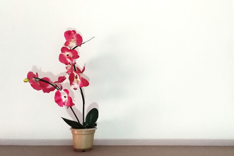 Artificial plant on table against white wall