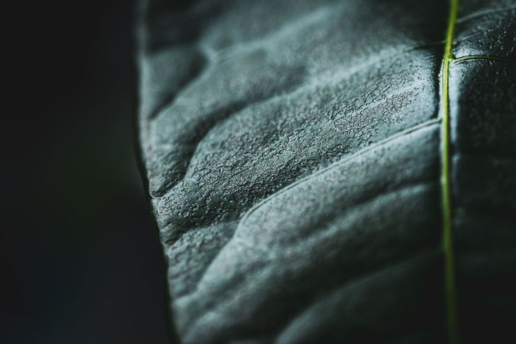 Detail shot of human hand