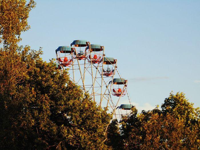 EyeEm Selects Tree Amusement Park Arts Culture And Entertainment Sport Basketball - Sport Sky Carousel Rollercoaster