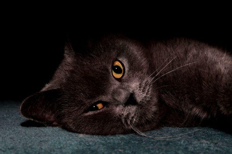 Them eyes Cat