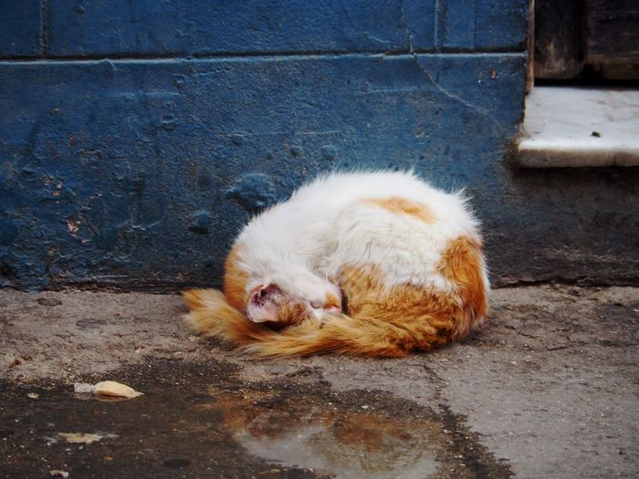 Mammal One Animal Animal Animal Themes Domestic Animals Pets Vertebrate No People Cat Domestic Cat Relaxation Day Feline Lying Down Outdoors City Hair Resting Wall Whisker Ginger Streetphotography Street Cat Dirty Copy Space