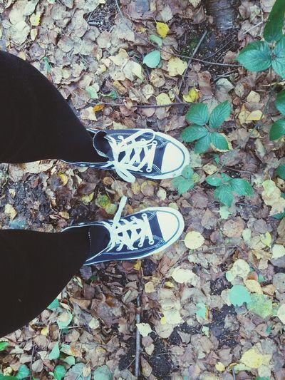 Autumn Leaves Converse Nature