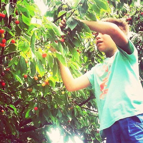 Kersen EyeEm Nature Lover Fruits Funtimes