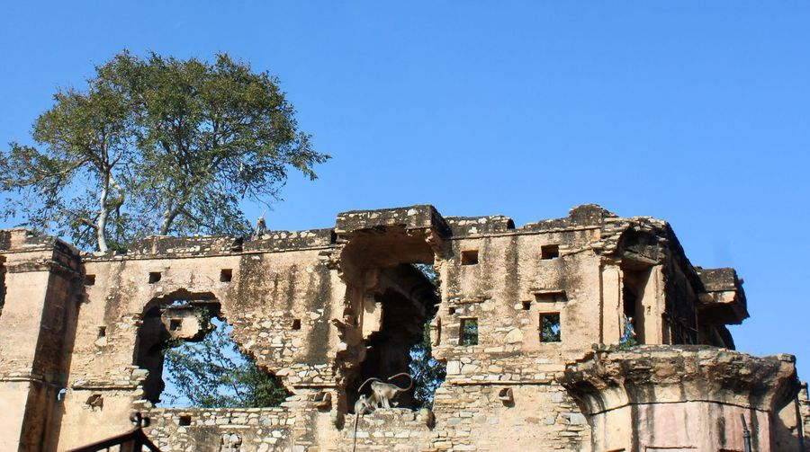 Langurs on ruin Architecture Sky Clear Sky Built Structure History The Past Low Angle View