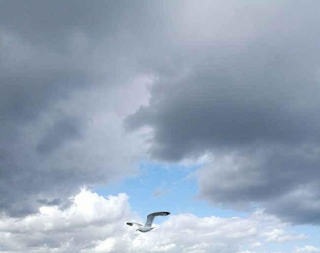 Cloud - Sky Flying Outdoors Sky Bird Storm Cloud Animal Wildlife Animals In The Wild Mid-air Day No People One Animal Animal Themes Nature Beauty In Nature