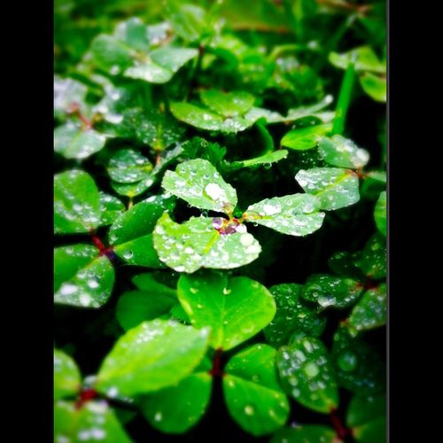 Nature Taking Photos Hello World Enjoying Life Rain Morning Dew Perfect Winters Day Green