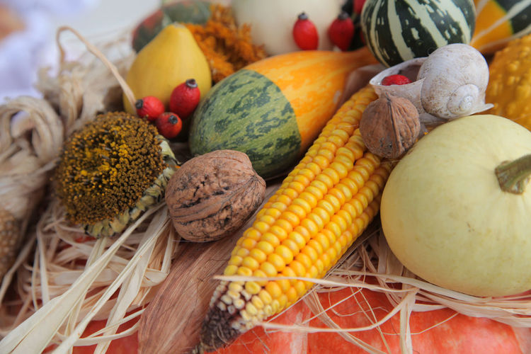 Autumn Harvest Organic Agriculture Autumn Bunch Corn Food Food And Drink Freshness Fruit Harvest Healthy Healthy Eating Ingredient Maize Pecan Pumpkin Raw Raw Food Ripe Season  Vegetables Vitamin