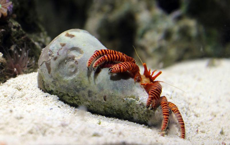 Animal Themes Animal Wildlife Animals In The Wild Close-up Day Hermit Hermit Crab Marine Marine Life Nature No People One Animal Outdoors Sea Life UnderSea The Week On EyeEm