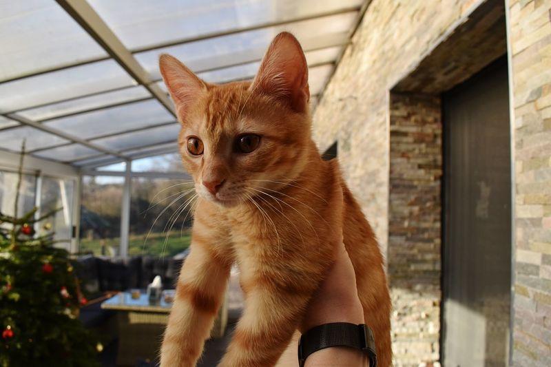 Le roi lion. 😼 Nikon Chatounet EyeEm Selects One Animal Animal Themes Mammal Animal Pets Domestic Animals Domestic Window Day Portrait Cat Vertebrate No People