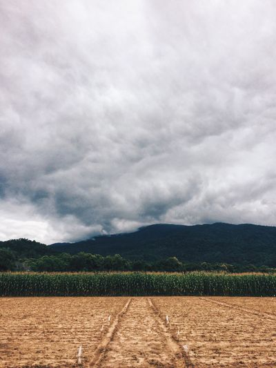Agricultural field against cloudy sky