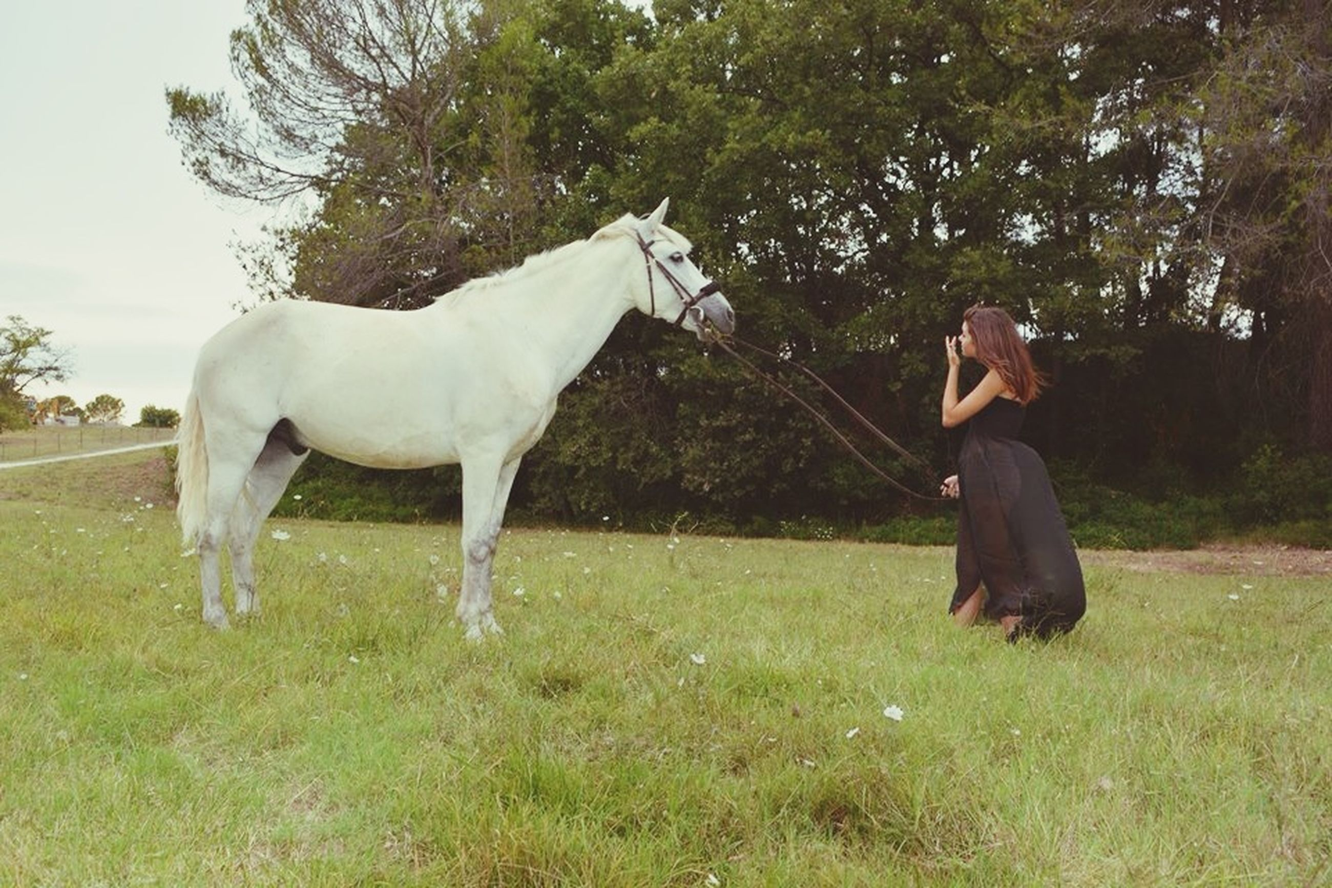 grass, full length, standing, horse, tree, field, domestic animals, animal themes, grassy, casual clothing, side view, lifestyles, mammal, nature, one animal, young adult, day, sky