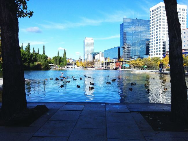 Lake Sabadell Catalonia Ducks Water