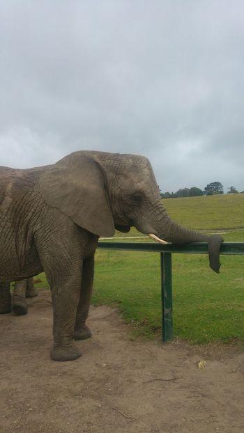 Knysna One Animal Elephant Animal Themes Beauty In Nature Nature