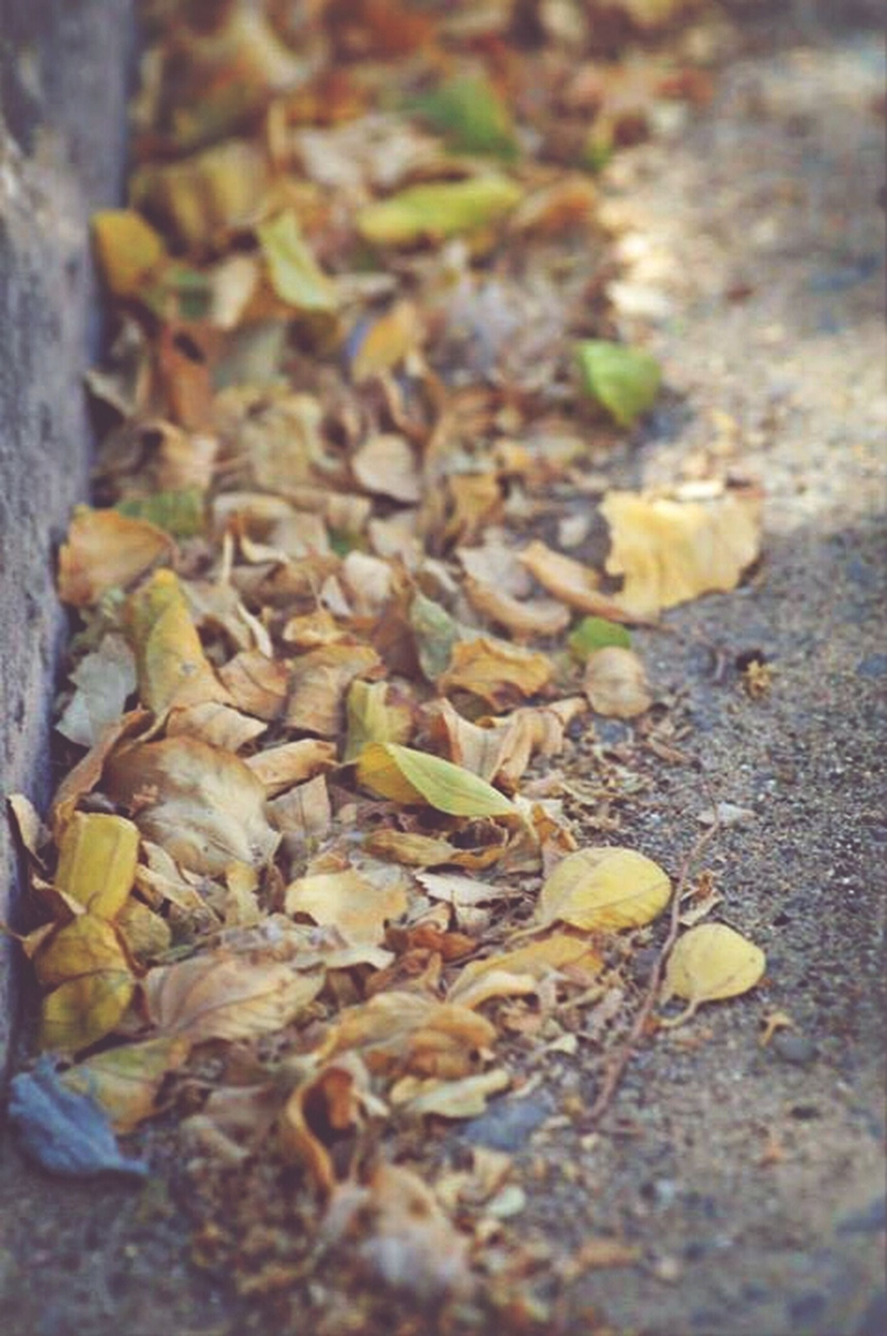 leaf, dry, nature, selective focus, high angle view, close-up, ground, fallen, fragility, day, outdoors, leaves, autumn, surface level, no people, field, growth, sunlight, street, plant
