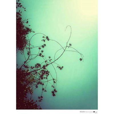 【 記憶 】 從心底被喚起 輕輕地撈上岸 深怕有個萬一 我想,你一直都在。 LGG4 手機攝影 Light Tree 365Snap