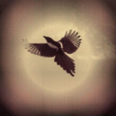 Bird Fly Sumaysiguenos Loyal_group1 ig_europe igworldclub_country igglobal ig_madrid igworldclub ig_capture igworldcub_award igers ig_merida ig_alicante igworldclub_team ig_spain igs_photos