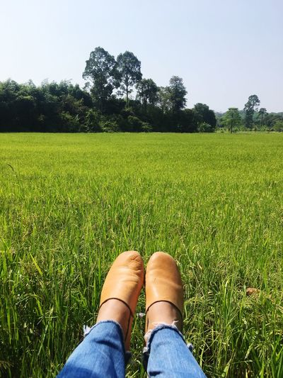 The feet in rice field with relaxing moment. Leather Shoes Paddy Field Rice Field EyeEm Selects Human Leg Low Section Growth Field Grass One Person Green Color Agriculture Women Human Body Part Beauty In Nature Lifestyles Rural Scene Nature Outdoors Real People