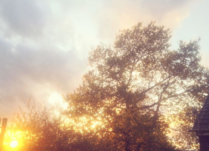 Amazing View Loved It Taking Photos Hanging Out Trees Walking Nature Light Sunset