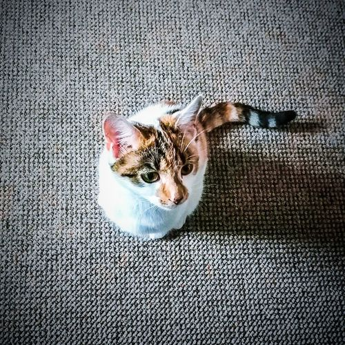 EyeEm Selects Calico Cats Are Special Calico Tortie Cat One Animal Animal Themes Indoors  Dog Pets Day No People Domestic Animals Mammal Close-up