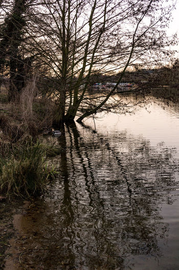Trees reflected in water at Whitlingham Country Park Norwich Whitlingham Country Park Beauty In Nature Day Lake Landscape Nature No People Outdoors Reflection Scenics Sky Tranquil Scene Tranquility Tree Water