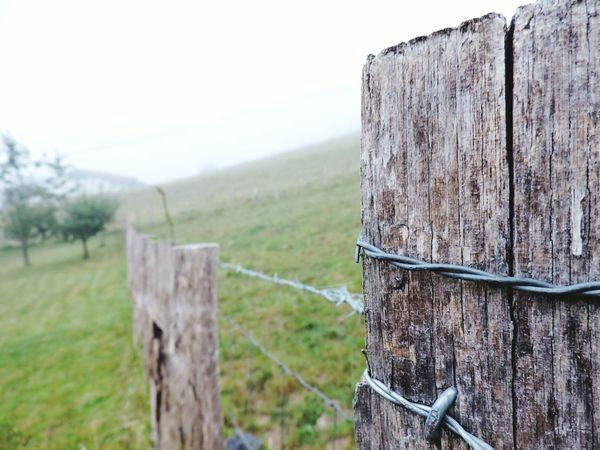 Countryside Foggy Outdoor Photography Fance Wood Paisvasco