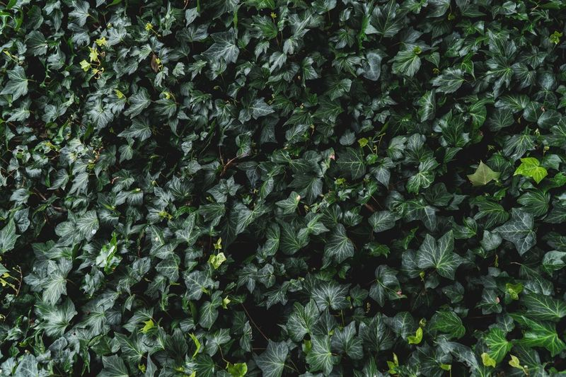 Background Texture Copy Space Background Backgrounds Pattern, Texture, Shape And Form Surfaces And Textures Textures and Surfaces Full Frame Green Color Growth Plant Backgrounds No People Day Beauty In Nature Nature Tranquility Outdoors Abundance Close-up Freshness Leaf Pattern High Angle View