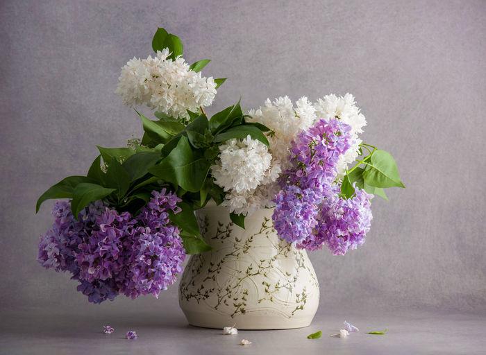 Lilac, still