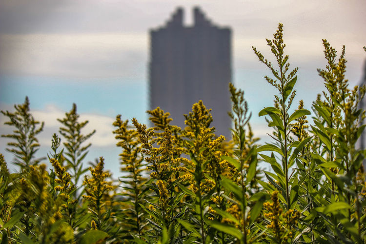 Plants against building and trees against sky