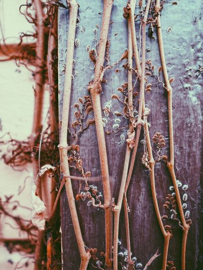 Nature Details Plant Life Plant Botanical Botanic Garden Photography Branches Abstractions Nature_collection Nature Textures Nature Beauty
