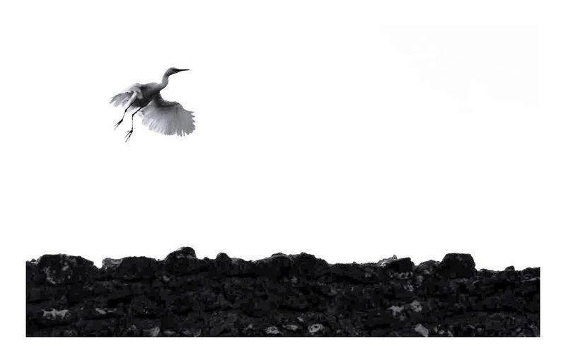 Bird flying over rocks
