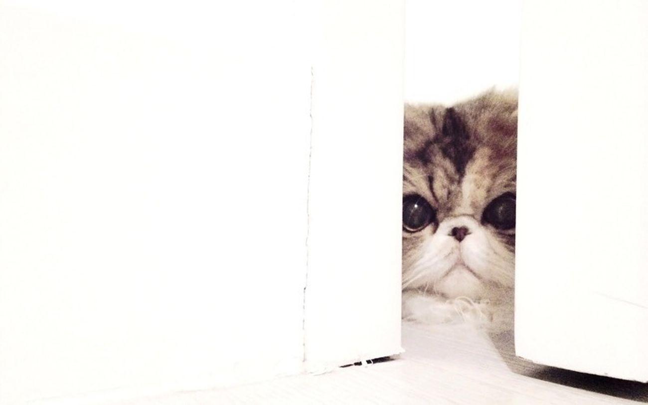 VSCO Cat