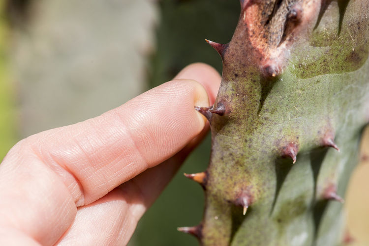 Cacti Cactus Ouch Plant Plants Care Close-up Day Finger Hand Human Finger Human Hand Hurt Nature Outdoors Succulent Plant Thorn Touching