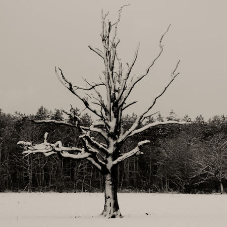 Tree in the snow, in the middle of winter Silence Waysofseeing Day Time Shot Denmead, Hampshire Lone Tree Monochrome Shot Outdoor Shot Snow On The Ground Tree With No Leaves Winter Shot Day Time Shot Denmead, Hampshire Lone Tree Monochrome Shot Outdoor Shot Snow On The Ground Tree With No Leaves Winter Shot
