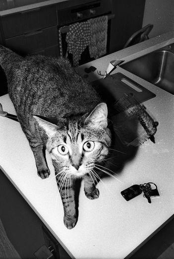 35mm Film Leica