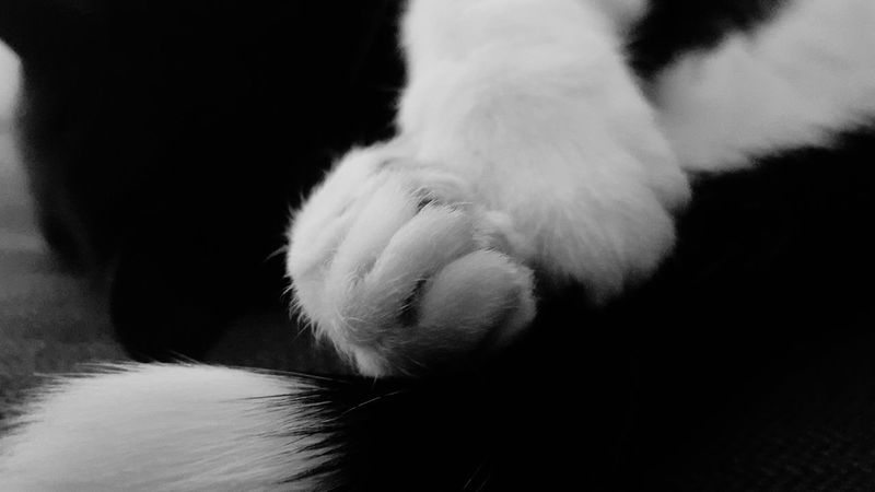 Black & White By Nature OpenEdit Catslife Couchlife Hanging Out Nap Time Sleeping Relaxing Cat Black & White Animals Hugging