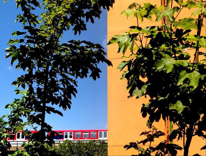 Shadwell Plant Tree Sky Architecture Growth Building Exterior Nature
