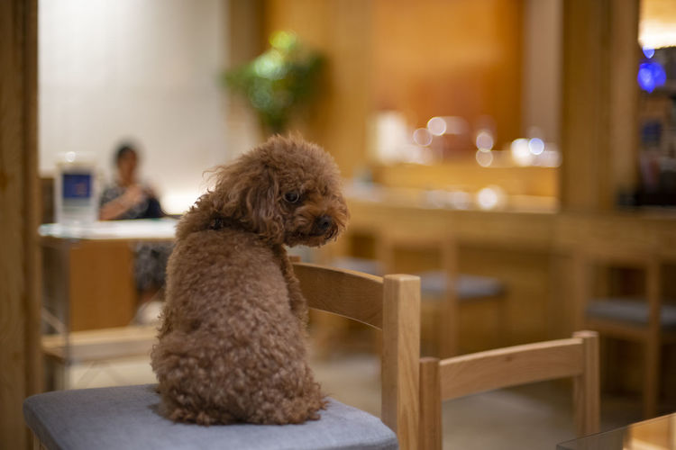想喝酒! Dog Animal Cute Bar Pets Furniture Sitting Puppy