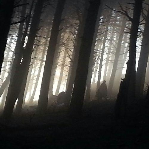 L'alba tra i boschi....