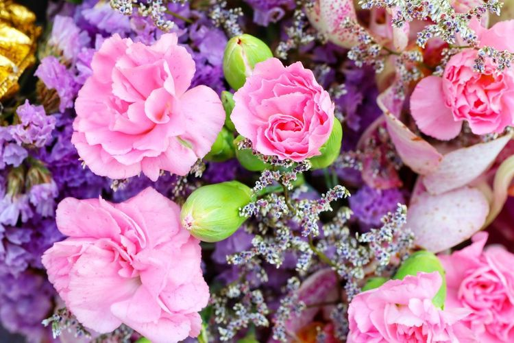 Flower Head Flower Pink Color Petal Peony  Close-up Plant Flowering Plant Wild Rose Lilac Crocus Hydrangea Single Rose Bunch Of Flowers Rose Hip Botanical Garden In Bloom Plant Life Blossom