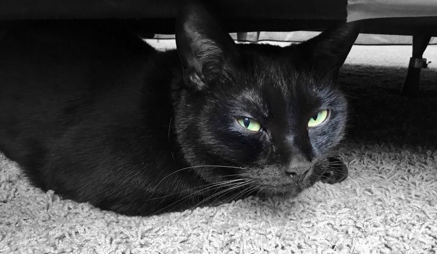 """""""My Secret Place"""" And you are invading it. Selective Color Blackandwhite Photography Black & White Black Cat Cats Of EyeEm Cats Pets Cat Domestic Animals Animal Themes Animal Feline Domestic Cat Close-up Whisker Portrait One Animal"""