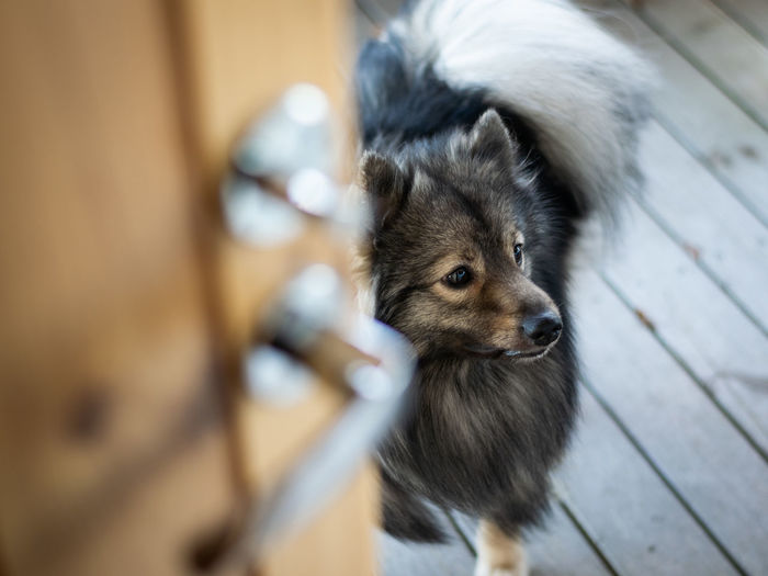 High angle view of dog looking away outdoors
