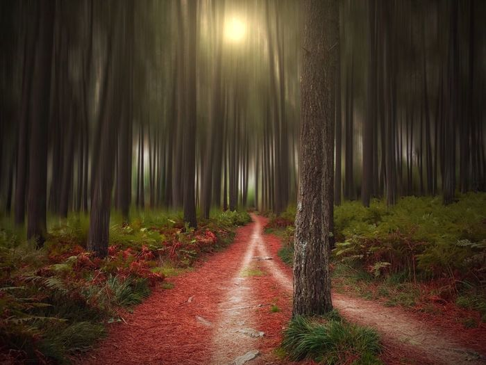 Tree The Way Forward Nature Tree Trunk Forest Tranquility No People Beauty In Nature Outdoors Growth Tranquil Scene Scenics Illuminated Night Nature Landscape Travel Minimalism Abstract Street Colorful Light And Shadow Beauty In Nature Bokeh