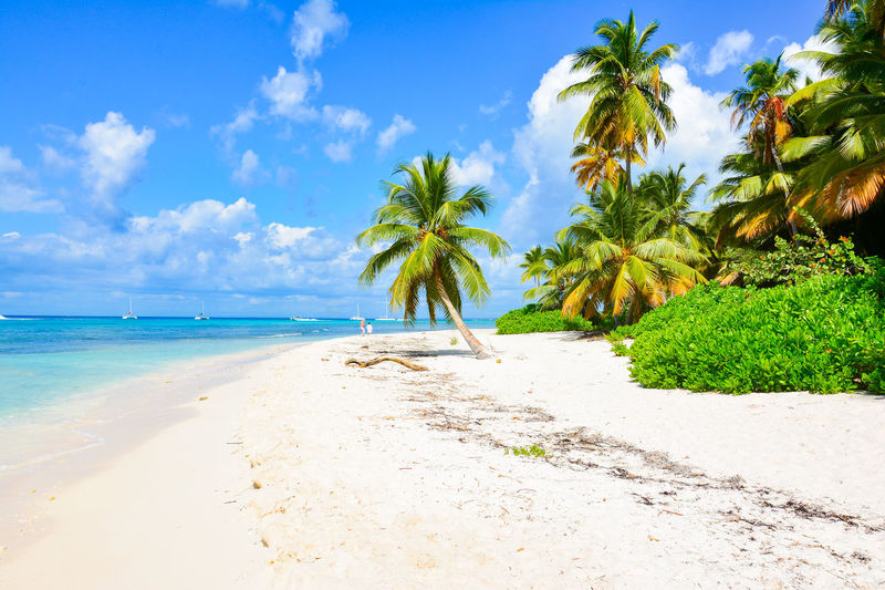 Beach Beauty Beauty In Nature Blue Cloud - Sky Day Horizon Over Water Idyllic Nature No People Outdoors Palm Palm Tree Postcard Sand Scenics Sea Sky Tranquil Scene Tree Tropical Climate Water