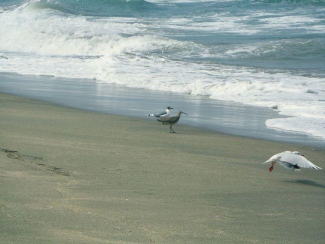 Sea Seagulls Sea Birds Nature