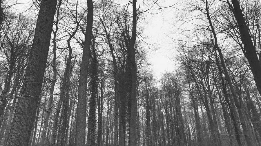 trees Outdoor Photography Trees And Nature Tree Area Trees And Sky Tree_collection  Nature Nature Photography Trees Village Life Trees And Sky EyeEm Nature Lover EyeEm Gallery Nature_collection Forest Photography Blackandwhite Photography Black And White Blackandwhite Black And White Photography Branch Forest Tree Trunk Full Frame My Best Photo