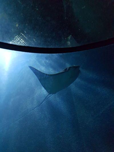 Cat Underwater Blue Sea Life