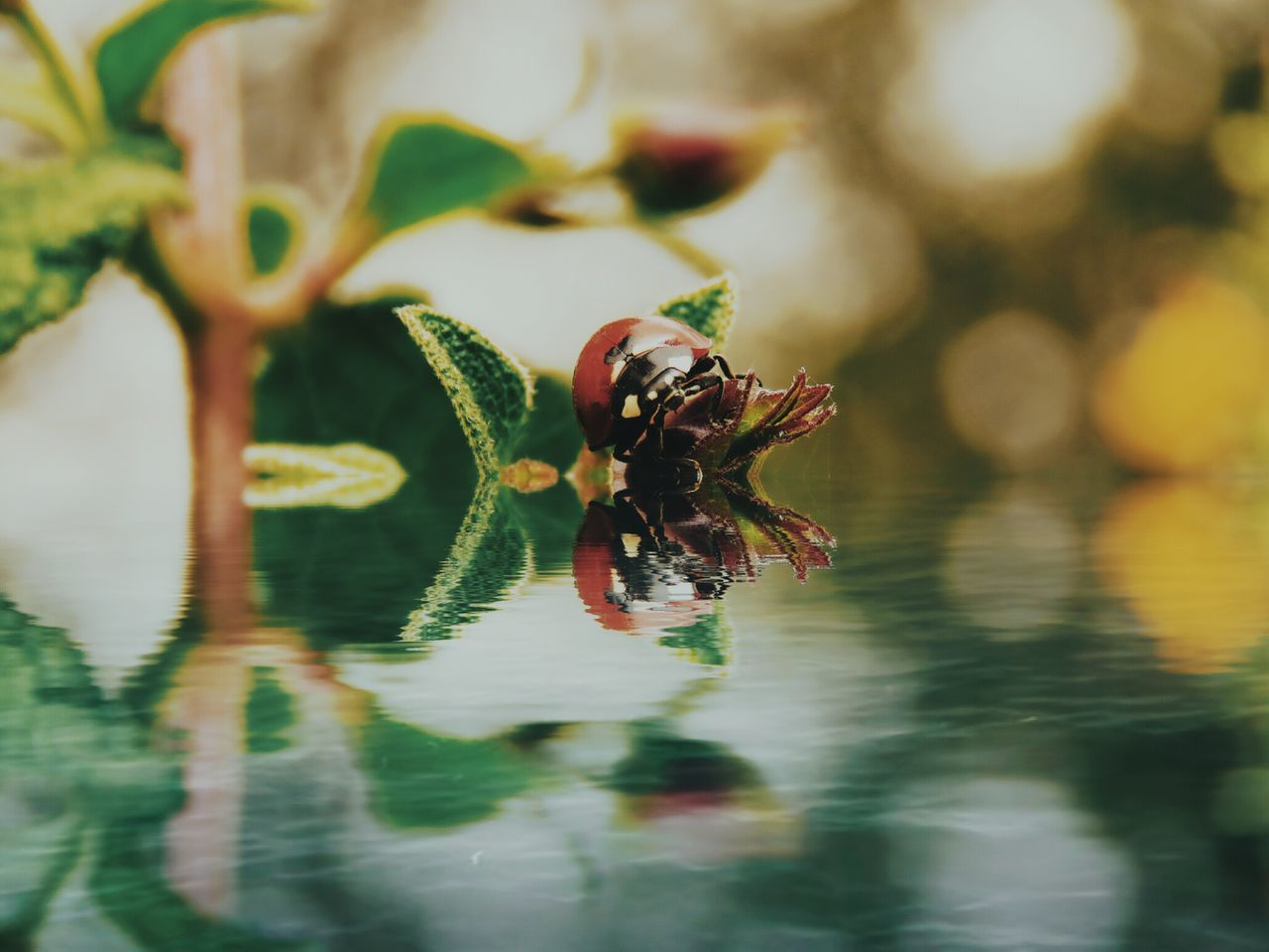animals in the wild, animal themes, one animal, insect, no people, animal wildlife, water, nature, close-up, day, outdoors, beauty in nature
