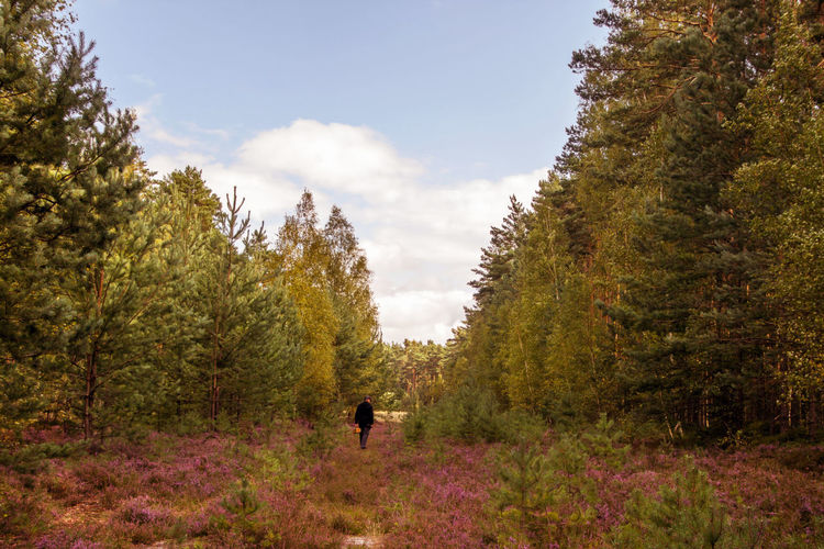 Man walking in forest against sky