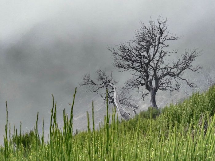 Nature Tree Grass Outdoors No People Plant Beauty In Nature Scenics Black Forest Black And Green Fog Eyem Nature Lover Eyemgallery Black Tree Creepy Frightening